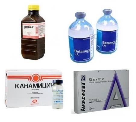 Антибиотики для эффективного лечения фурункулеза