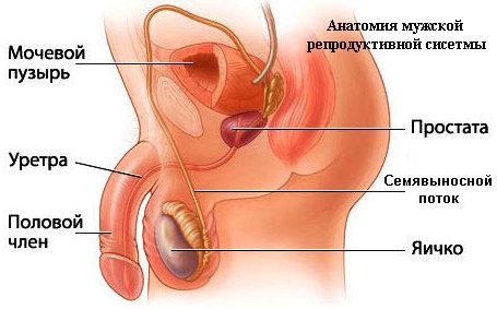 Абактериальный простатит: специфические признаки и способы лечения