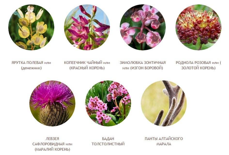 Растения и травы для усиления потенции — 10 наиболее действенных
