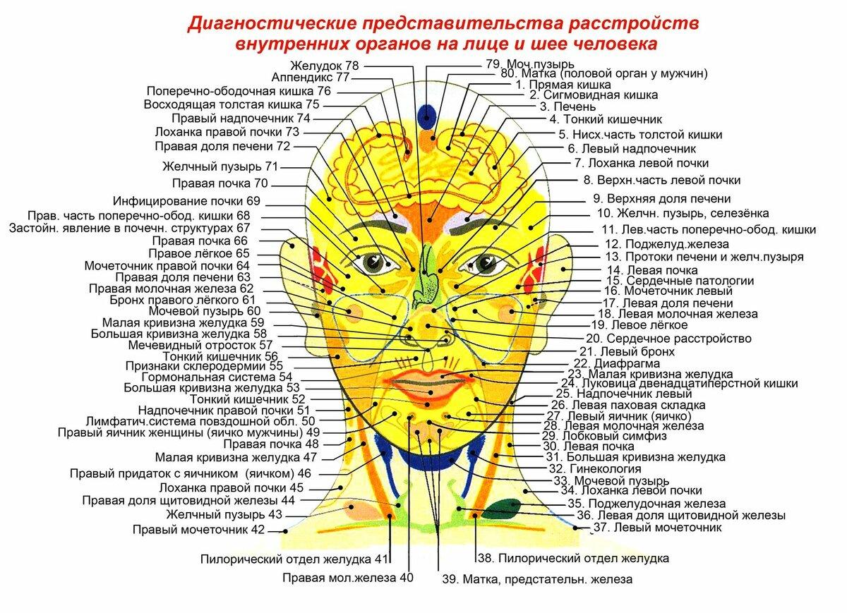 Прыщи на лице: за какие органы отвечают по зонам
