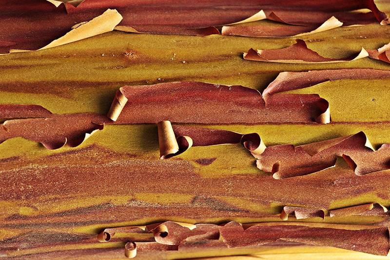 Кора осины при аденоме простаты: чем полезна и как применять