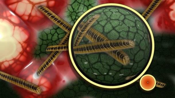 Антибиотики при стафилококковой инфекции