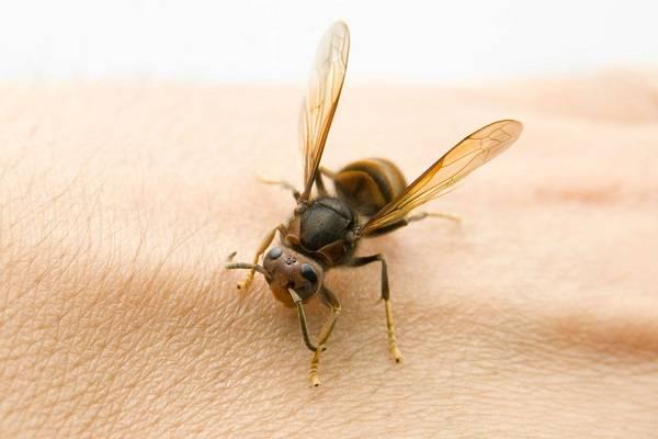Профилактика, лечение пчелами и особенности апитерапии