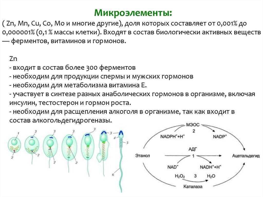 Химический состав мужской спермы