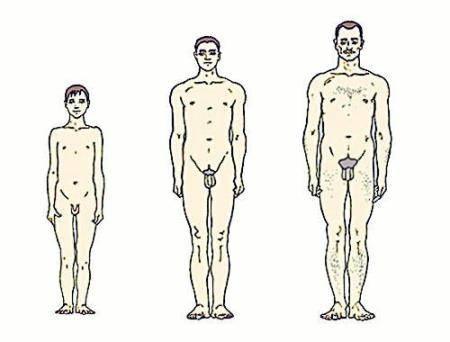 Мужское здоровье: во сколько лет у мужчин наступает импотенция