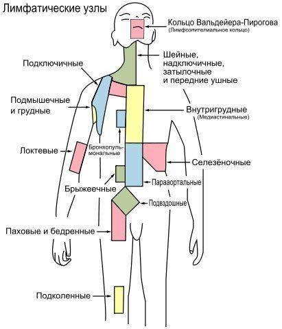 Где расположены лимфоузлы у человека фото