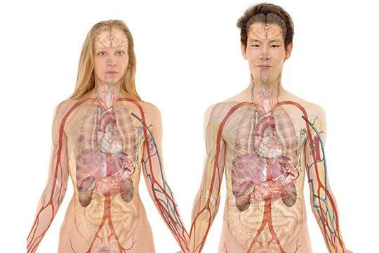 Нефроптоз почки - что это такое? симптомы и лечение заболевания