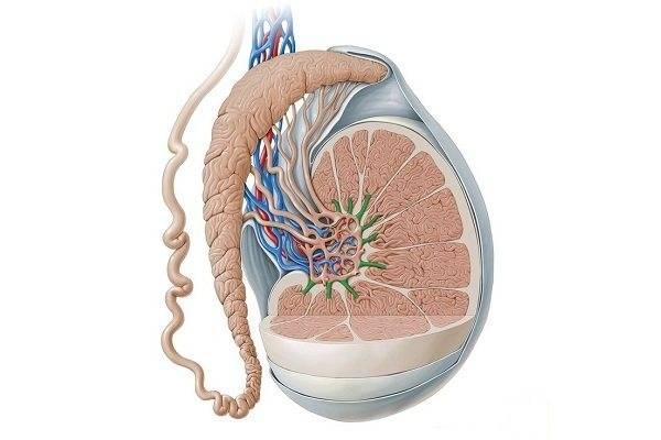 Орхит и эпидидимит