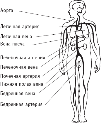 Левосторонний сальпингоофорит