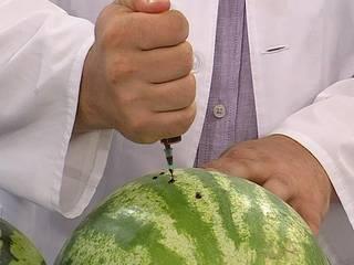 Борьба с болезнями и вредителями арбуза