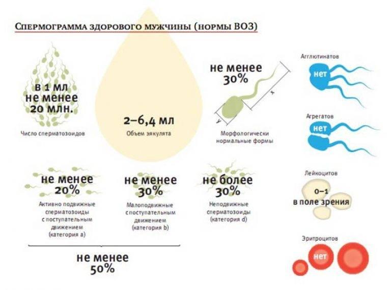 Активность сперматозоидов: от чего зависит и как улучшить