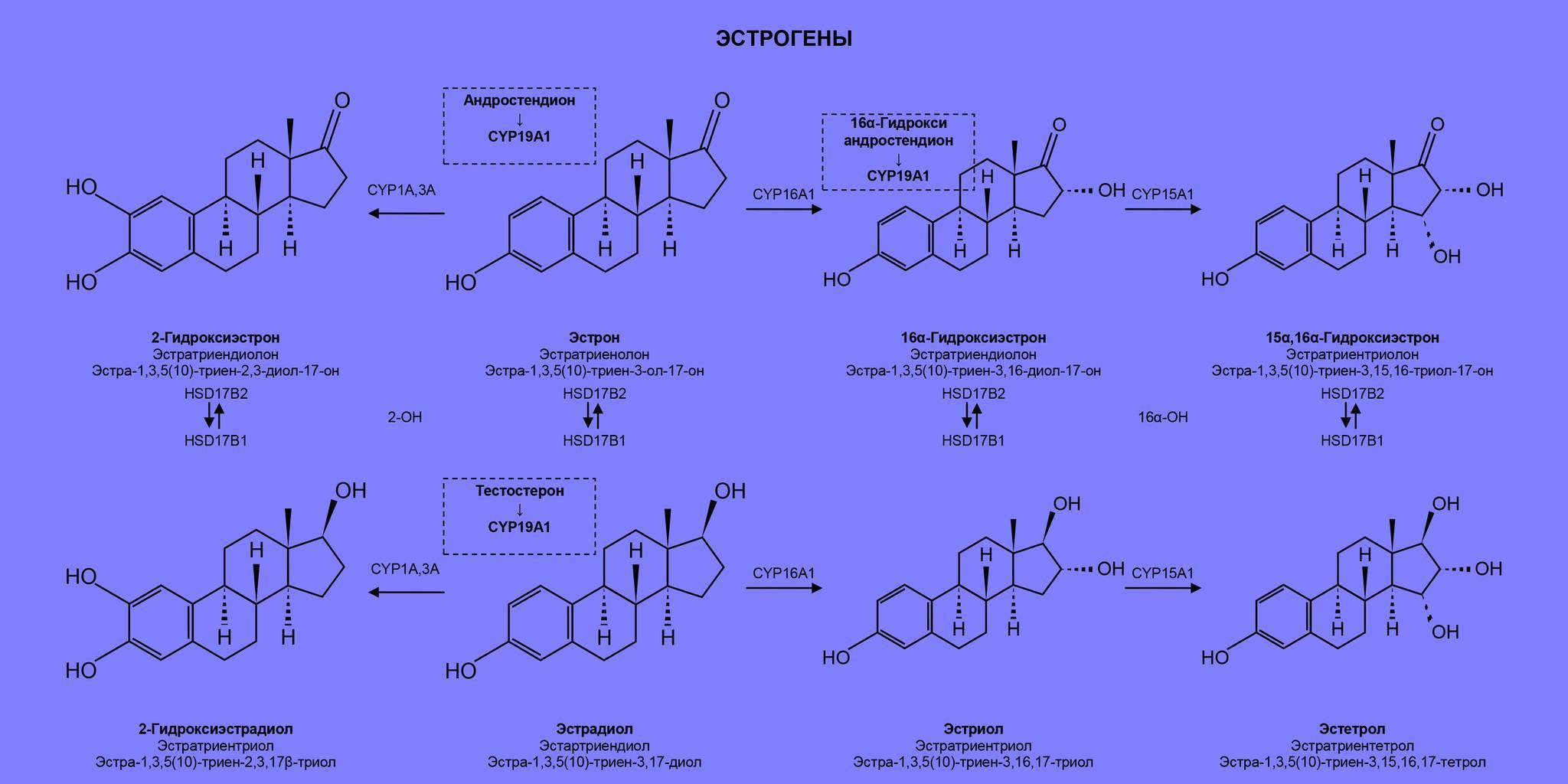 Тестостерон и гспг: причины и лечение отклонений глобулина от нормы