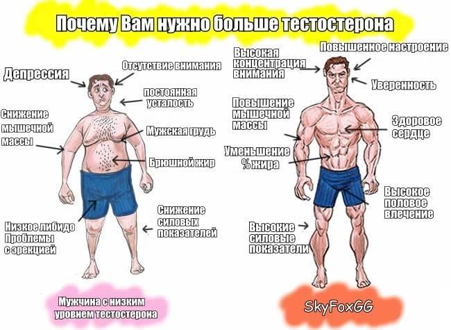 Важный белок – глобулин связывающий половой гормон