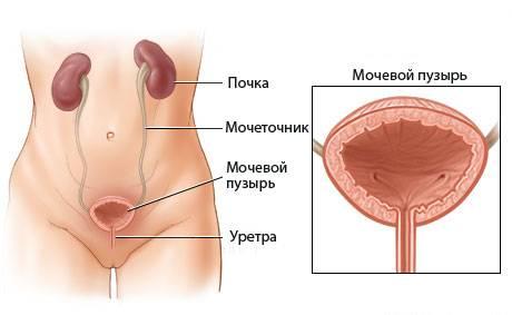 Что делать с воспалительными процессами мочеполовой системы у женщин