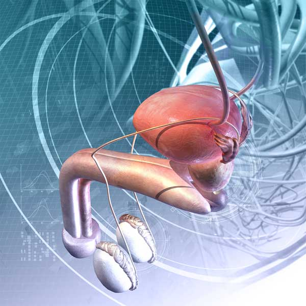 Симптомы и лечение болезней мочеполовой системы у мужчин