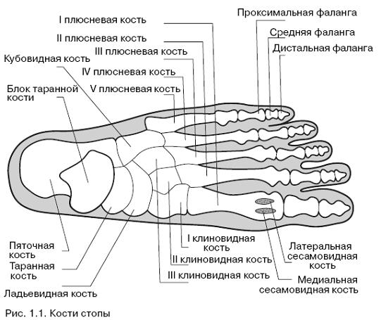 Характерные проявления и способы лечения папиллом на стопе
