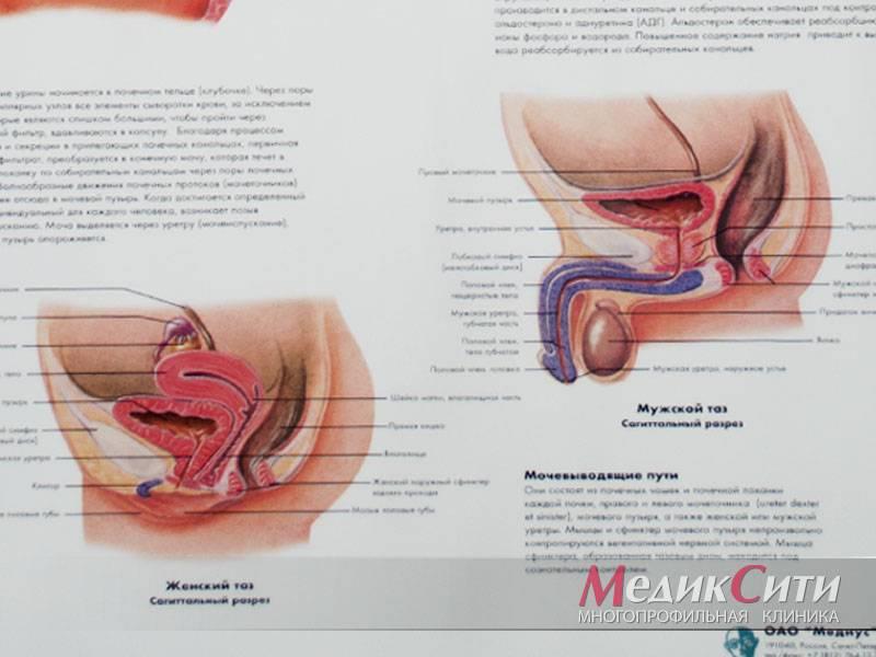 Хламидии: симптомы