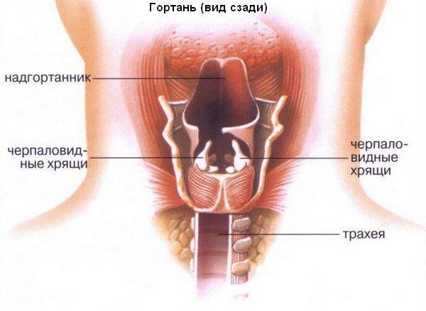 Папилломы во рту: причины появления впч и как лечить папилломатоз