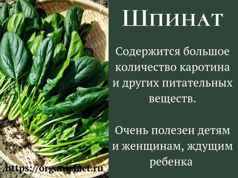 Зачем есть шпинат? польза и вред этого растения для здоровья мужчин