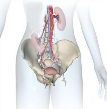 Нефроптоз (опущение почки) - причины, симптомы, диагностика и лечение