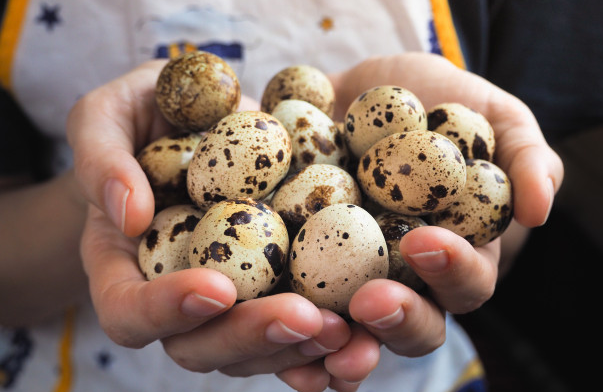 Сколько перепелиных яиц можно есть в день без вреда для здоровья