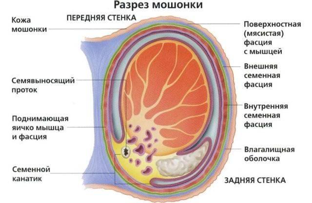 Шелушение между ног: фото, возможные болезни, лечение