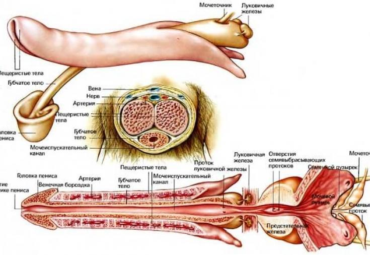 Липофилинг голеней и ног в клинике «медиал»