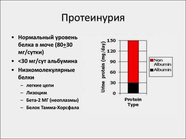 Что значит появление в моче белка, какая его норма?