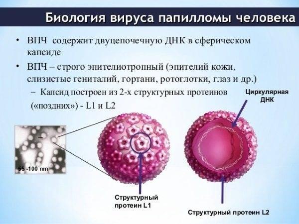Все о кондиломах во влагалище и кондиломатозе у женщин. информация от эксперта
