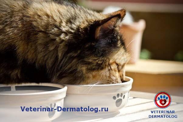 Акне у кота: о чём говорит симптом