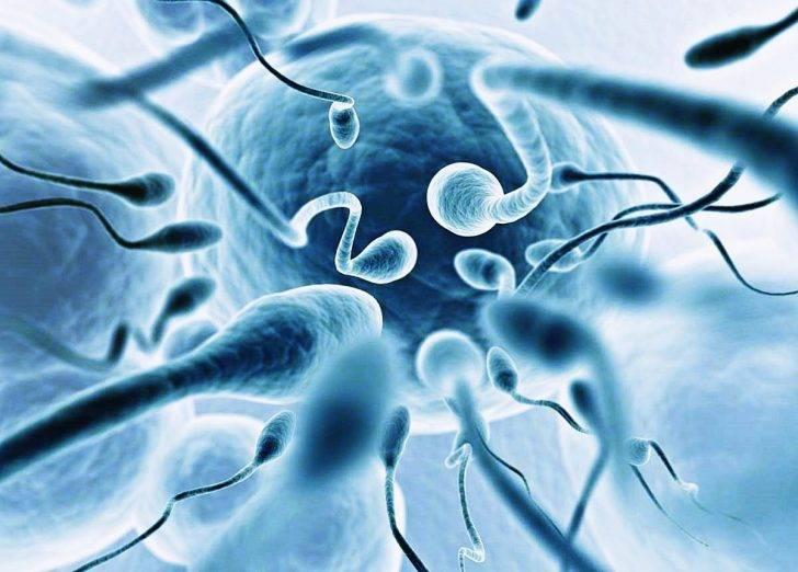 Расшифровка спермограммы по крюгеру