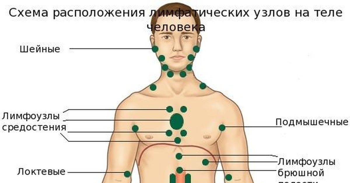 О чем говорят увеличенные лимфоузлы в паху у мужчин
