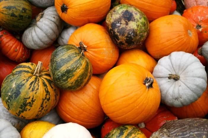 Полезные свойства семян тыквы и противопоказания для здоровья