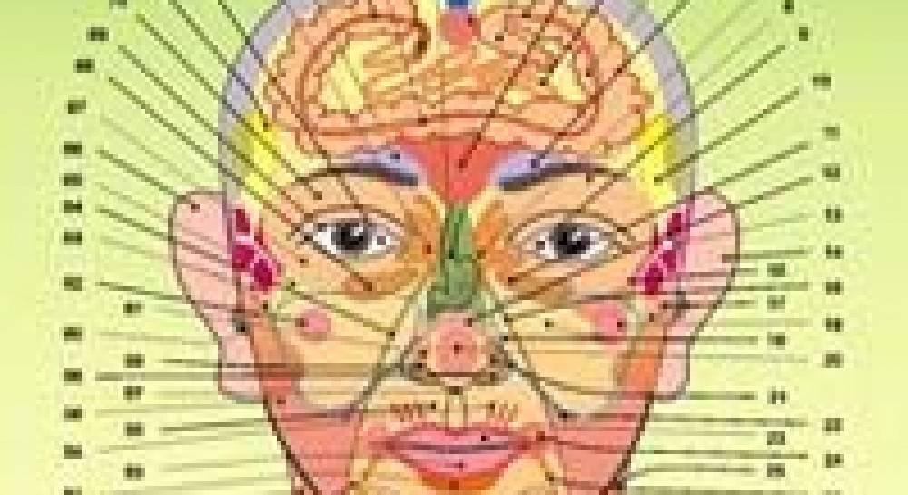 За какие органы отвечают прыщи на лице