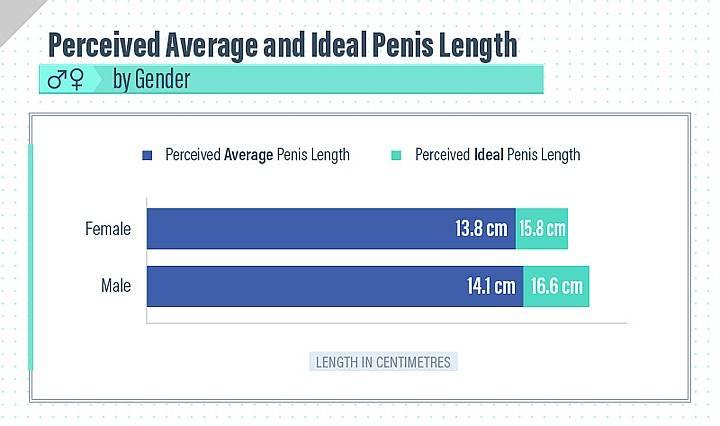 Нормальный размер мужского полового члена