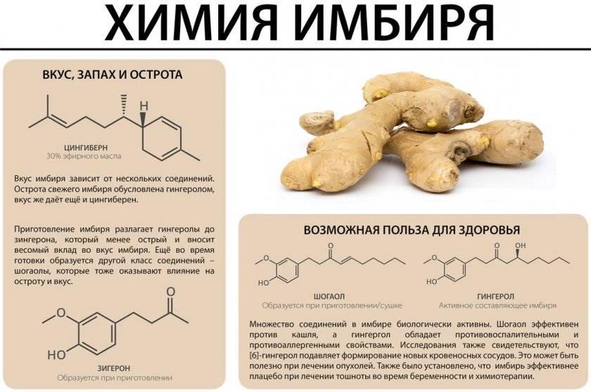Основные полезные свойства и противопоказания корня имбиря