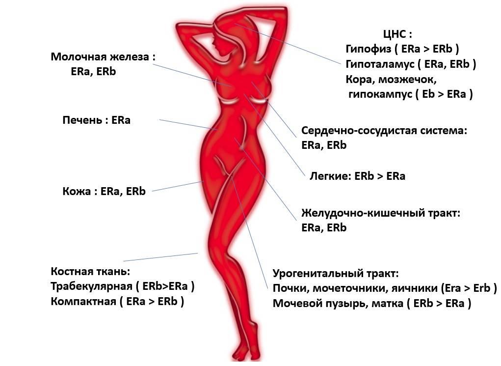 Повышенный эстроген! как понизить?