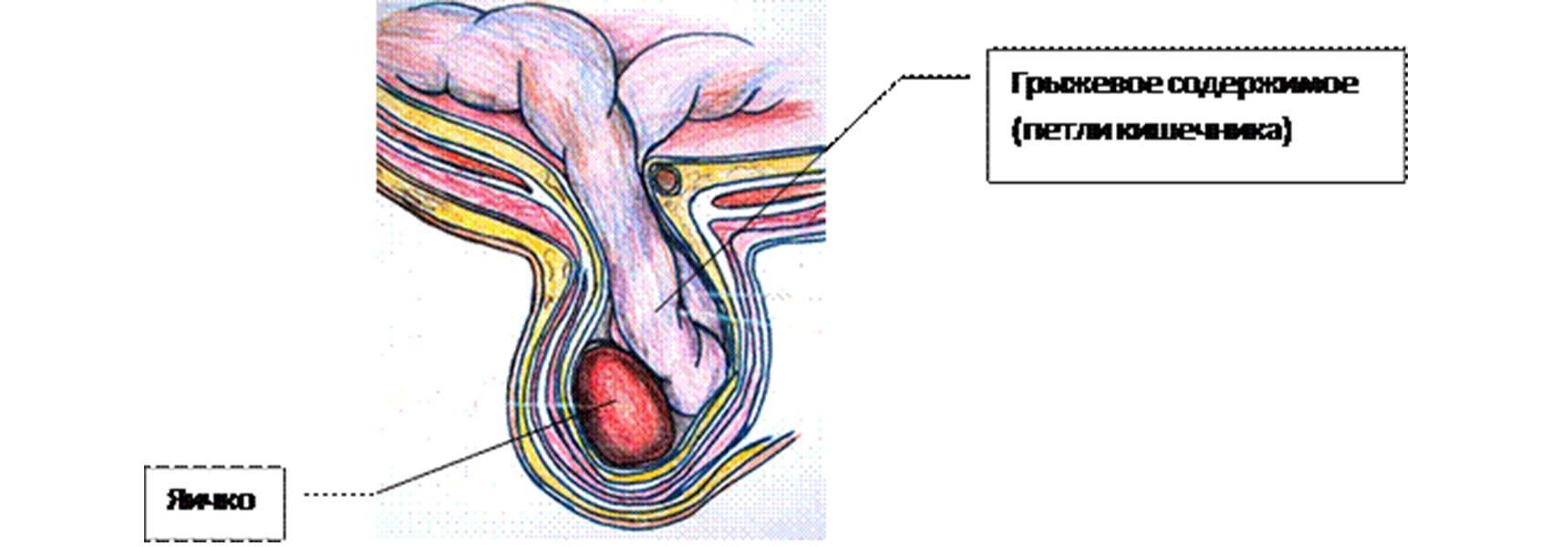 Процесс опорожнения мочевого пузыря: в норме и при нарушениях здоровья