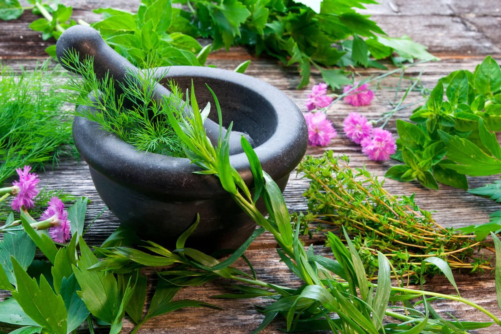 Какие травы самые полезные для повышения потенции у мужчин