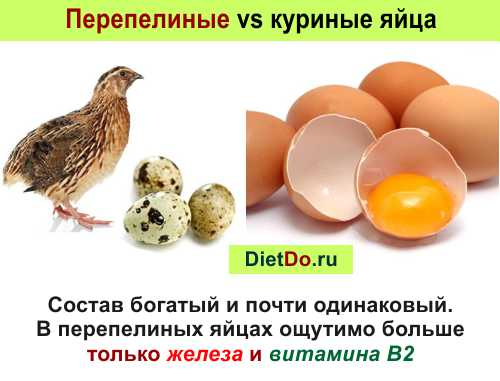 Перепелиные яйца: полезные свойства и противопоказания