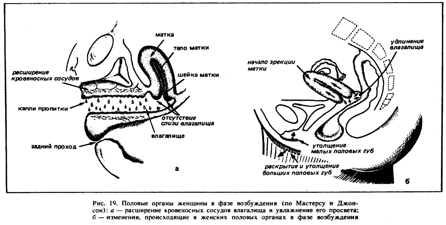 Методы избавления от преждевременной эякуляции