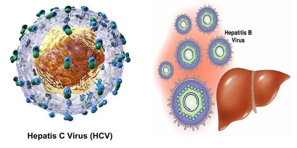 Сколько вирус вич живет на руках