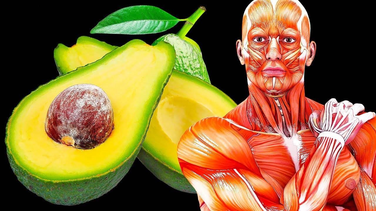 Польза авокадо: полезные свойства и противопоказания к применению. 130 фото + советы как выбрать овощ правильно