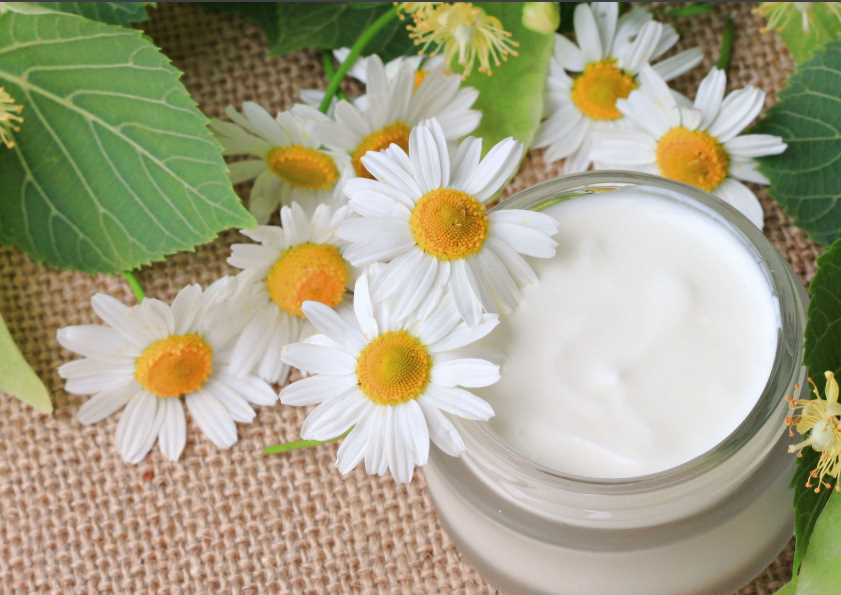 Отвар ромашки для гладкой и красивой кожи. как использовать отвар ромашки с пользой для кожи?