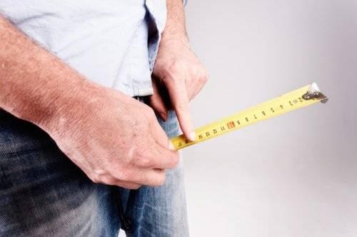 Определение среднего размера члена (длина, толщина и ширина)