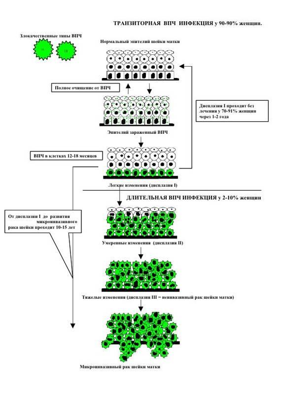 Причины появления и активизации впч в организме