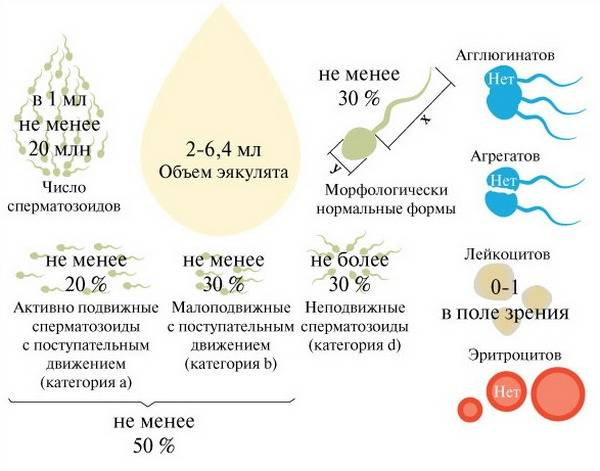 Способы повышения подвижности сперматозоидов