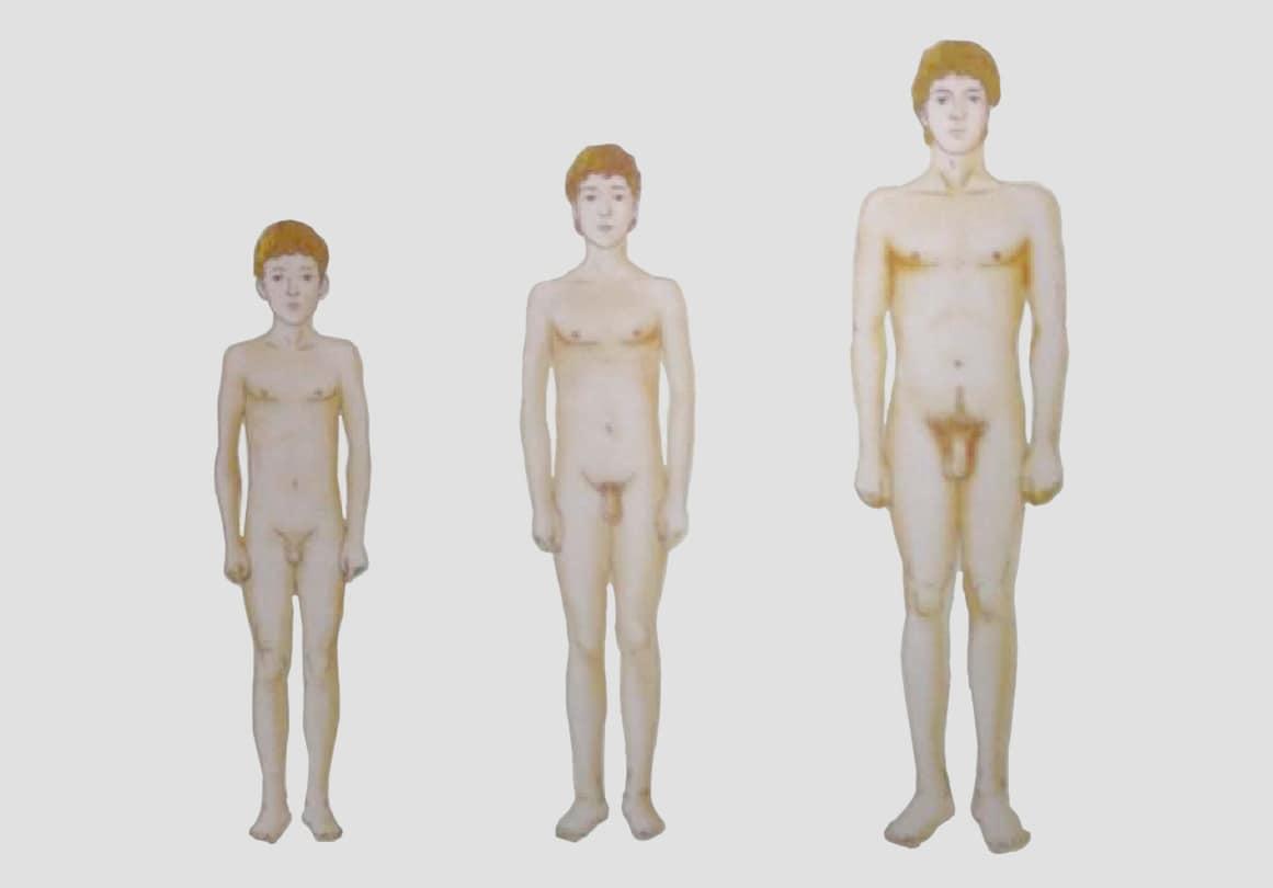 Почему не растет половой. до какого возраста растет половой член мужчины