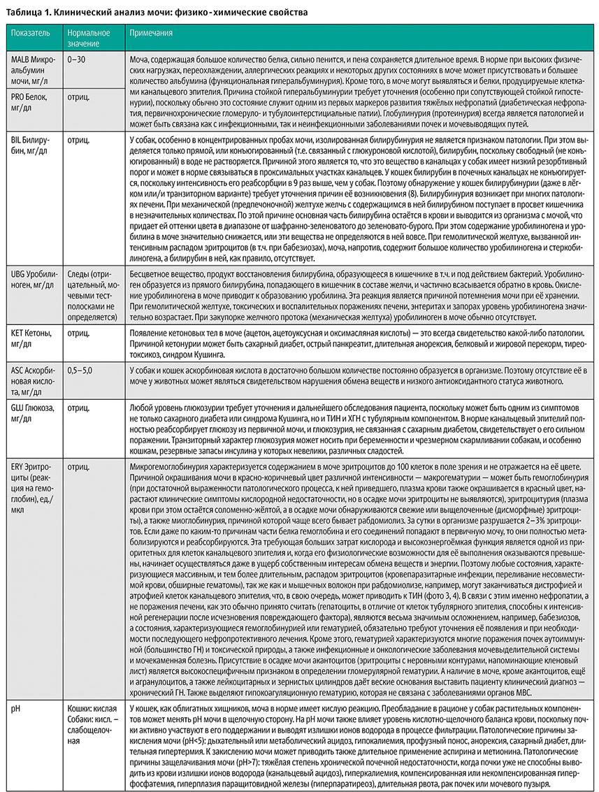 Анализ секрета простаты: порядок процедуры, расшифровка результатов, нормы и отклонения