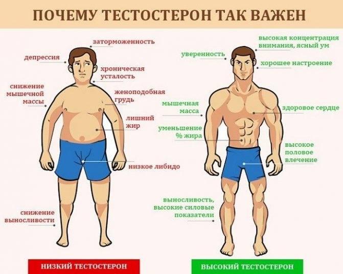 Определение уровня тестостерона у мужчин в домашних условиях